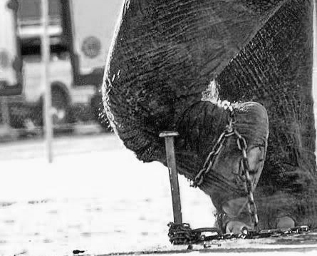 chained-elephant